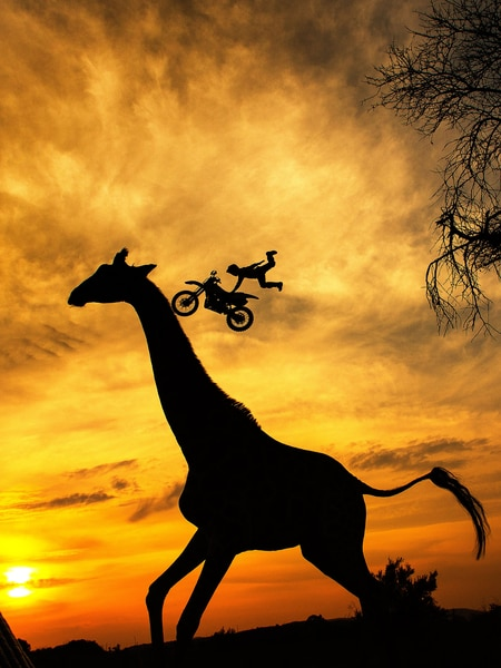 Giraffe Lucie having fun with the FMX boys
